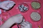 Dividere i semi per forma e colore
