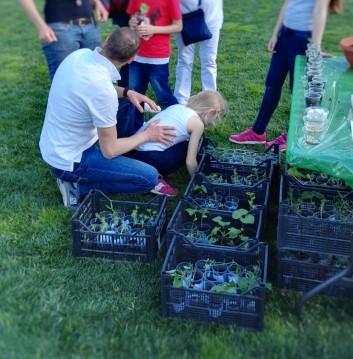 Piantine seminate e coltivate dai bambini delle scuole primarie... passaparola!