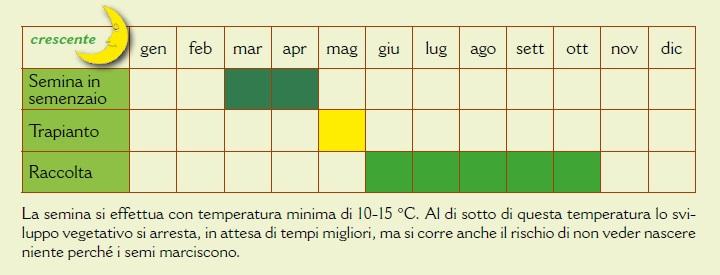 Calendario Di Semina.Impariamo A Conoscere Le Piante Il Pomodoro L Orto Dei