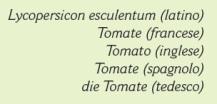 Come si dice pomodoro
